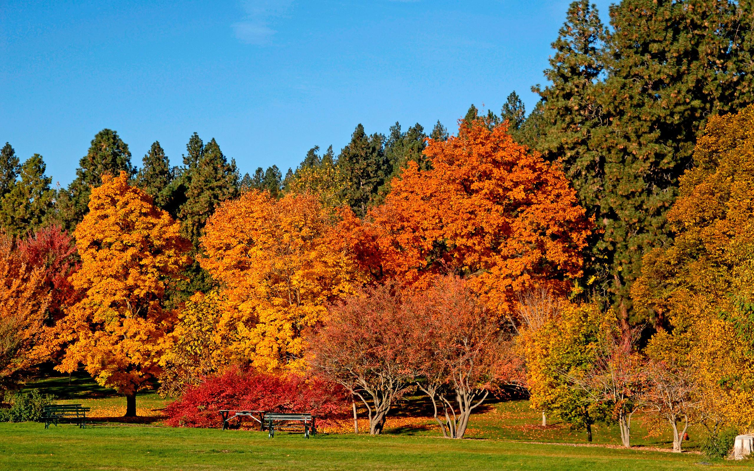 можно заказать красота осеннего леса фото фатеева